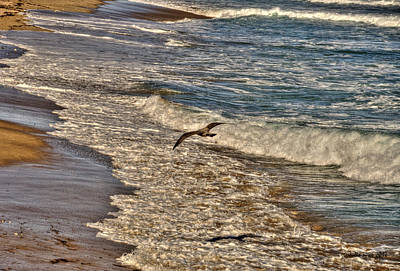 Art Print featuring the pyrography Bird Gliding Over Seashore by Julis Simo