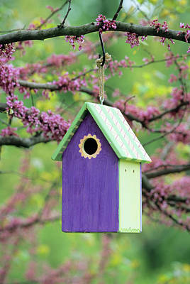 Cercis Photograph - Bird House Nest Box In Eastern Redbud by Richard and Susan Day