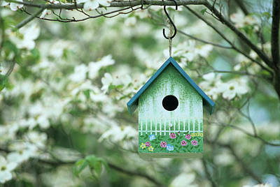 Bird House Nest Box In Flowering Art Print