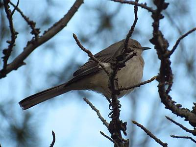 Photograph - Bird In A Tree by Teresa Cox