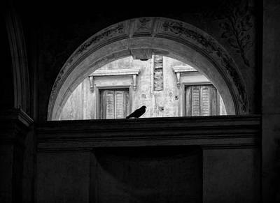 Photograph - Bird In An Arch by Marianne Campolongo