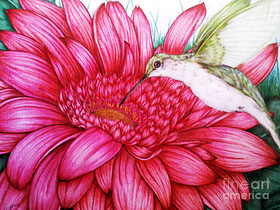 Gerbera Drawing - Bird In Bloom by Derrick Rathgeber