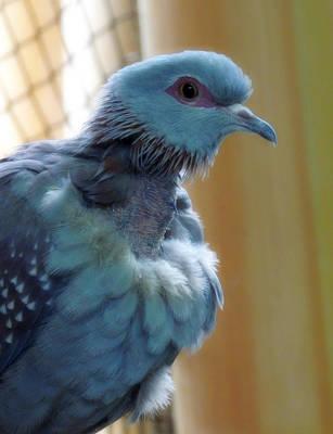 Bird In Blue Dress Original
