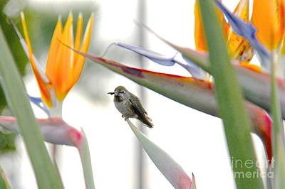 Photograph - Bird In Paradise by Suzanne Oesterling