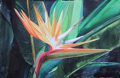 Painting - Bird In Paradise by Teresa Beyer