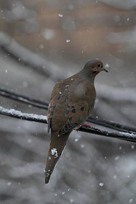 Fly Photograph - Bird In Snow - Animal - 01131 by DC Photographer