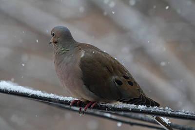 Beak Photograph - Bird In Snow - Animal - 01139 by DC Photographer