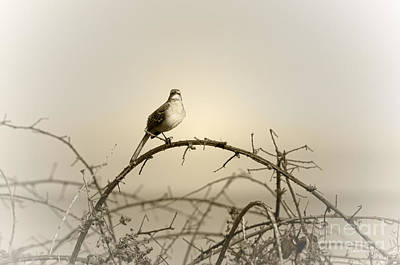 Photograph - Bird In The Briar by Artist and Photographer Laura Wrede