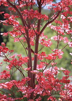 Dogwood Blossom Photograph - Bird In The Dogwood Tree by Carol Groenen