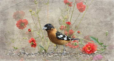 Photograph - Bird In The Garden by Angie Vogel