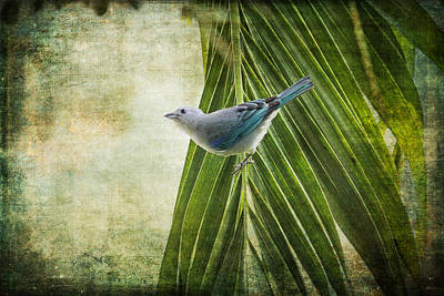 Photograph - Bird In The Jungle by Peggy Collins