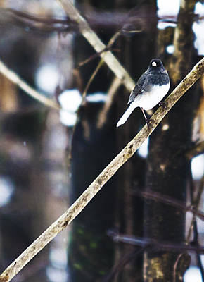 Photograph - Bird In The Snow by Heather Grow