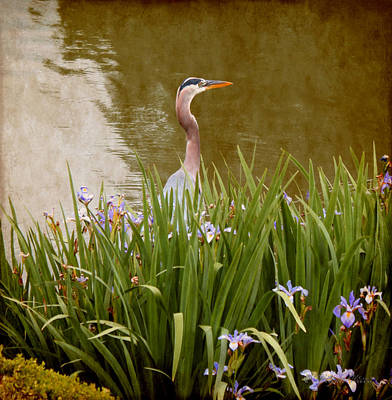 Art Print featuring the photograph Bird In The Water by Milena Ilieva