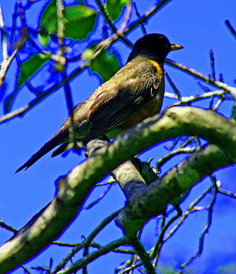 Photograph - Bird In Tree by Joseph Coulombe