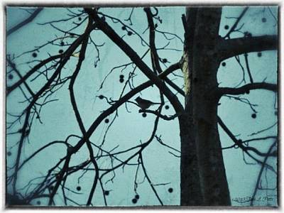 Art Print featuring the photograph Bird In Tree by Tara Potts