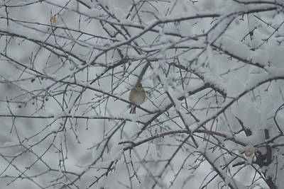 Photograph - Bird In Winter by Ron Read