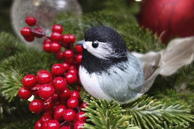 Photograph - Bird In Xmass Tree by Joan Reese