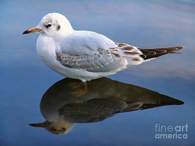 Bird Reflections Art Print by John Swartz