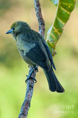 Photograph - Bird by Marion Galt