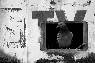 Photograph - Bird Motel No.2 Bw by Daniel Woodrum