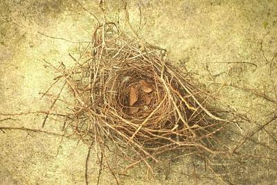 Bird Nest II Art Print by Suzanne Powers