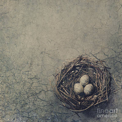 Artistic Digital Art - Bird Nest by Jelena Jovanovic