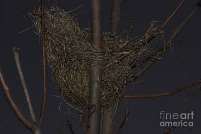 Photograph - Bird Nest by Mark McReynolds