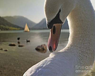 Thomas Kinkade Rights Managed Images - Bird of a Feather Royalty-Free Image by Edmund Nagele