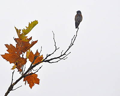 Print featuring the photograph Bird Of Autumn by AJ  Schibig