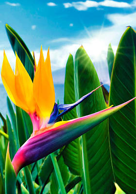 Bird Of Paradise 5 Art Print
