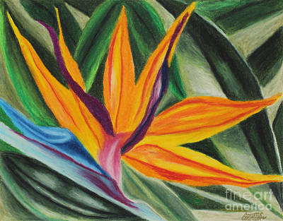 Painting - Bird Of Paradise by Annette M Stevenson