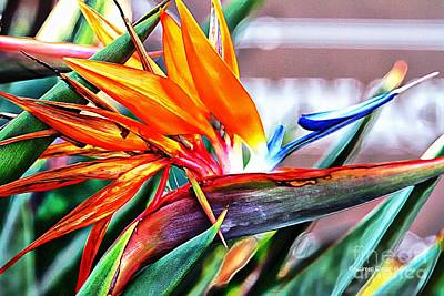 Photograph - Bird Of Paradise by Audreen Gieger