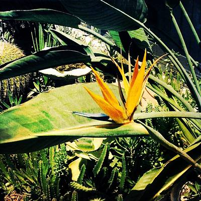 Bird Of Paradise Art Print by Beth Williams
