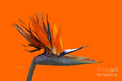 Digital Art - Bird Of Paradise by E B Schmidt
