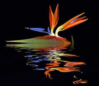 Bird Of Paradise Flood Art Print
