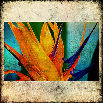 Yellow Bird Of Paradise Photograph - Bird Of Paradise Flower 1 by Susanne Van Hulst