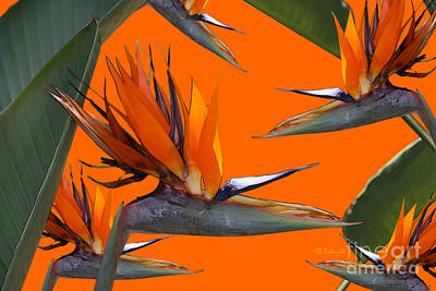 Digital Art - Bird Of Paradise Gathering by E B Schmidt