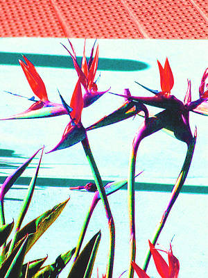 Photograph - Bird Of Paradise by Lisa Dunn