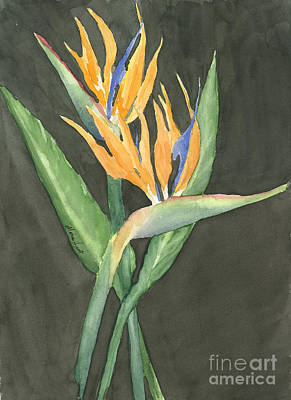 Bird Of Paradise Flowers Painting - Bird Of Paradise by Maria Hunt
