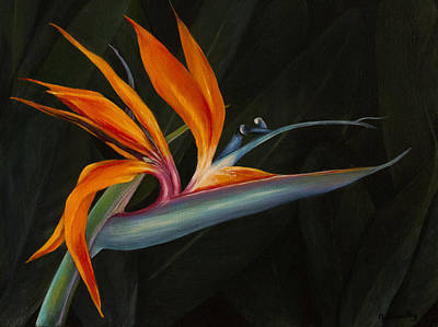Painting - Bird Of Paradise by Nancy Lauby