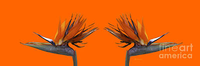 Digital Art - Bird Of Paradise Pair by E B Schmidt