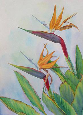 Bird Of Paradise Strelitzia Reginae Original by Elena Roche