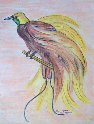 Drawing - Bird Of Paradise by Susan Turner Soulis