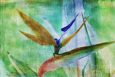 Floral Watercolor Photograph - Bird Of Paradise Watercolor by Deborah Benoit
