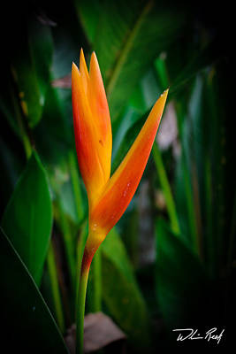 Bird Of Paradise Art Print by William Reek