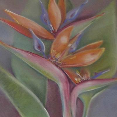 Painting - Bird Of Paradise by Cheryl Miller