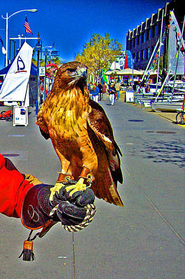 Bird Of Prey At Boat Show 2013 Print by Joseph Coulombe