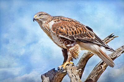 Photograph - Bird Of Prey by Barbara Manis
