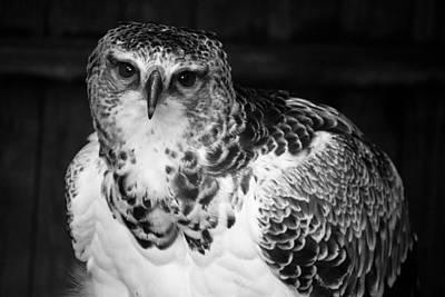 Warwick Castle Photograph - Bird Of Prey by Chris Whittle