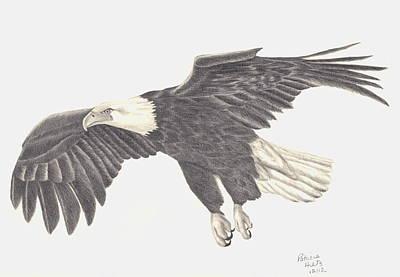 Soaring Drawing - Bird Of Prey by Patricia Hiltz